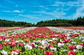 Você sabe viver como as flores?